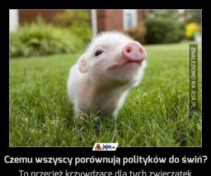 Czemu wszyscy porównują polityków do świń?