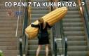 Co pani z tą kukurydzą...?