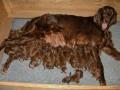 Liczna psia rodzina