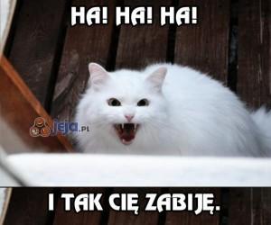 Z tym kotem nie ma żartów