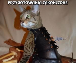 Każdy kot potrzebuje zbroi!