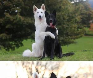 Yin i Yang - najlepsi przyjaciele