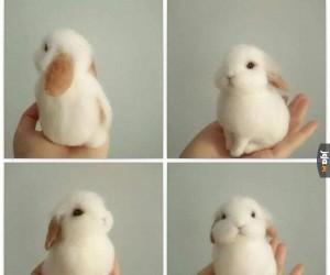 Słodki króliczek jest słodki