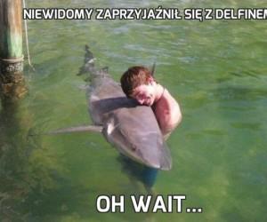 Niewidomy zaprzyjaźnił się z delfinem