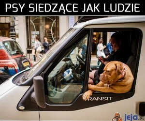 Psy siedzące jak ludzie cz.2