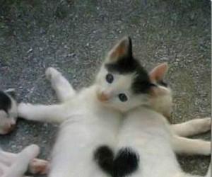Kociakowych Walentynek!