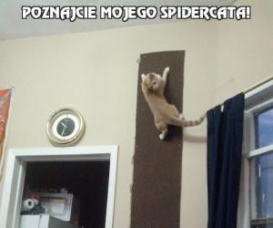 Poznajcie mojego spidercata!