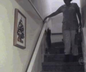 Jak kot schodzi ze schodów