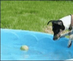 Pies i piłeczka w basenie cz.2