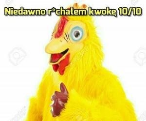 Nie robią prezerwatyw dla kurczaków