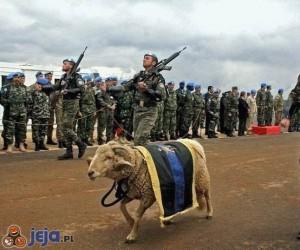 Owca - generał