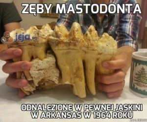 Zęby mastodonta