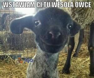 Wesoła owca i masz się cieszyć!