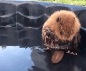 Mały bóbr w kąpieli