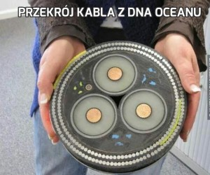 Przekrój kabla z dna oceanu