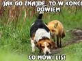 Najgorszy pies myśliwski świata