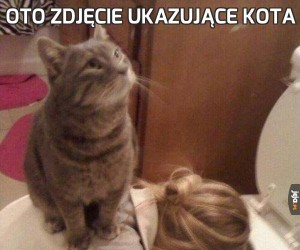 Oto zdjęcie ukazujące kota
