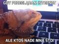 Gdy przeglądam internet
