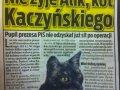 Nie żyje kot Kaczyńskiego