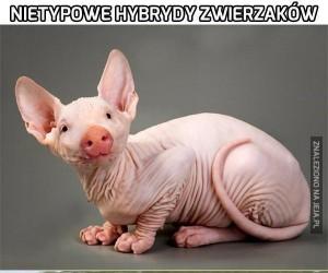 Nietypowe hybrydy zwierzaków cz.2