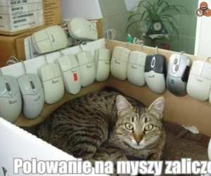 Kot i jego trofea