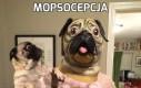 Mopsocepcja