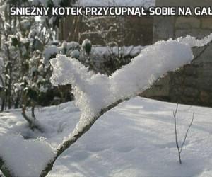 Śnieżny kotek przycupnął sobie na gałęzi