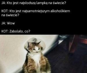 Kot chce mi coś przekazać