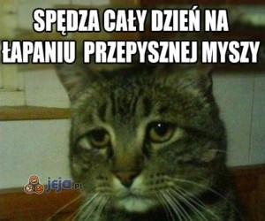 Doceń swojego kota...