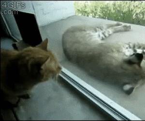 Obudź się dziki śpiochu