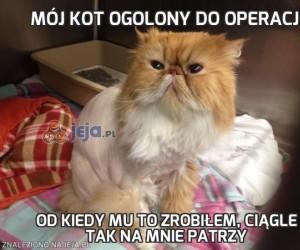 Mój kot ogolony do operacji