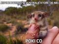 Jedyne zwierzę w Australii, które Cię nie zabije