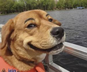 Psy z brwiami