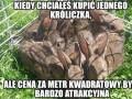 Metr kwadratowy króliczków