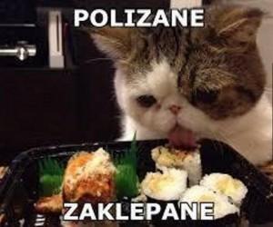 Mądry koteł!