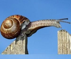 Skok ślimaka