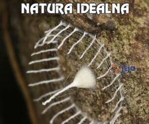 Natura idealna
