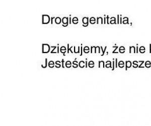 Drogie genitalia...