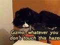Powiedz kotu żeby czegoś nie robił...
