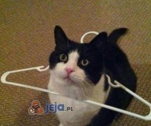 Nowa moda wśród kotów