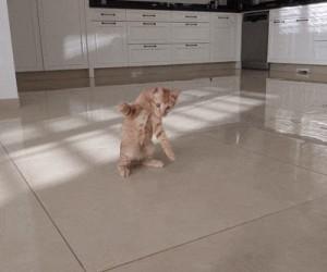 Kot bramkarz