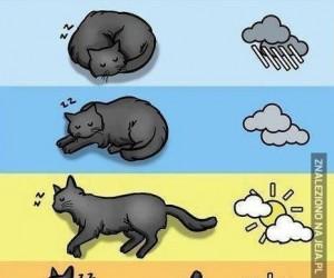 Kocia prognoza pogody