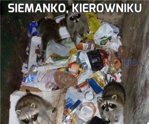 Siemanko, kierowniku
