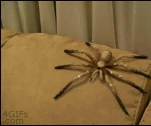 Och, taki mały pajączek