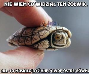 Przerażony żółwik