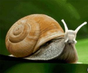 Odrzutowy ślimak
