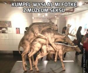 Kumpel wysłał mi fotkę z Muzeum Seksu