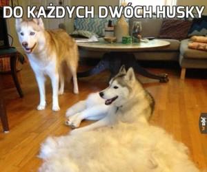 Do każdych dwóch Husky