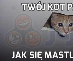 Twój kot patrzy