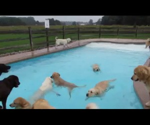 Tak wygląda basen w hotelu dla psów